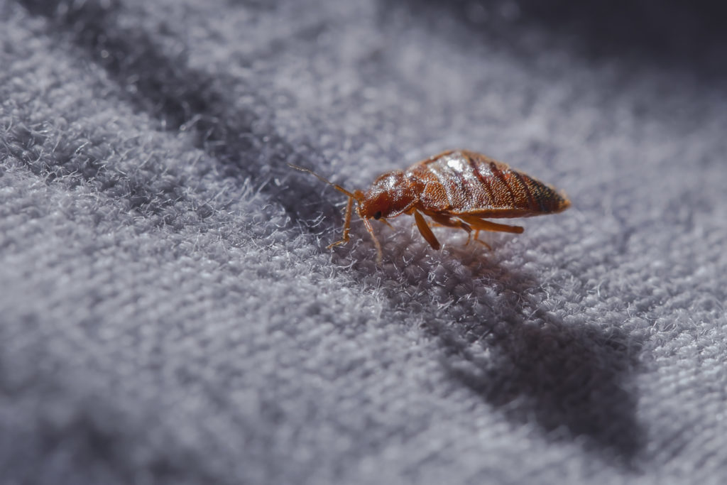 Bed Bugs Treatment Cost Prices 2020 Price This Please