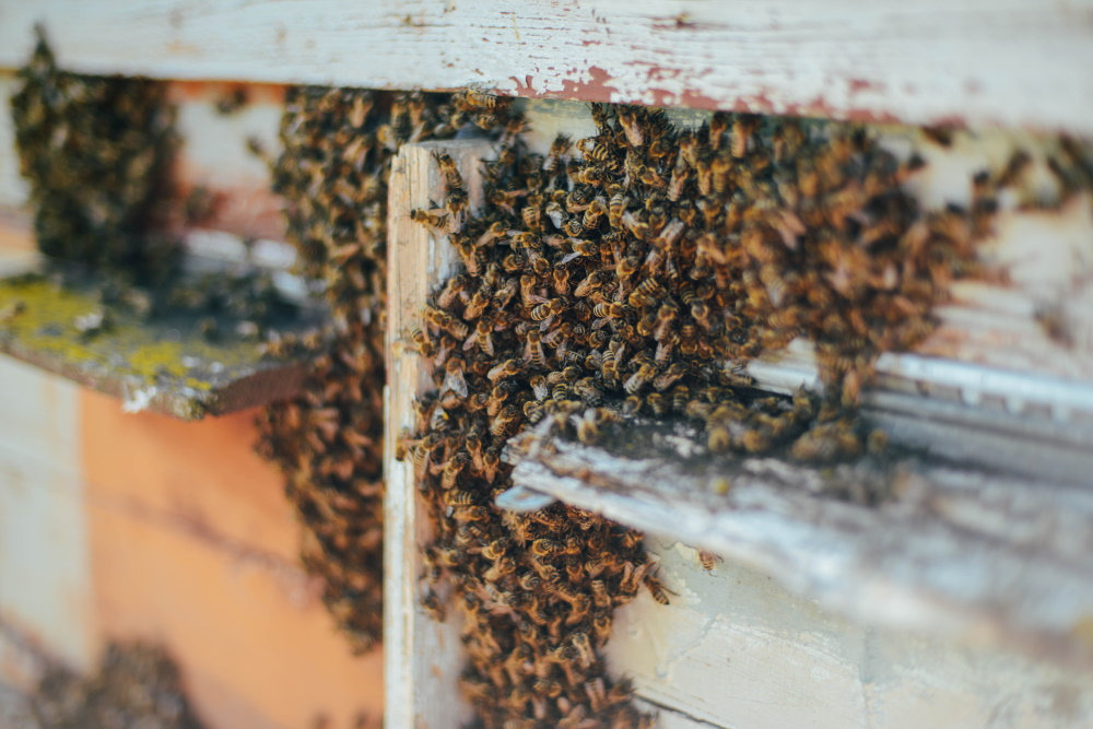 Bee Removal Cost & Prices 2021